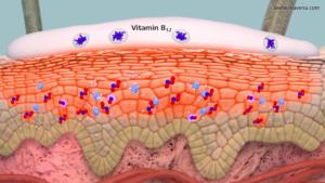 Wirkmechanismus von Vitamin B12 bei der Anwendung