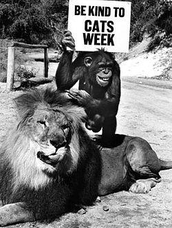Löwe Clarence und Affe Judy von der TV-Serie Daktari